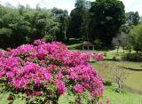botanická zahrada, Srí Lanka