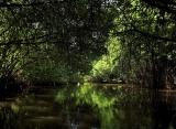 Centara Ceysands Bentota - mangrovníky
