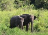 slony minneriya