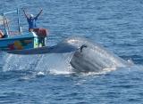 Zájazdy Srí Lanka - pozorovanie velrýb