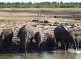 slony v Udawalawe Srí Lanka