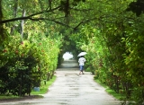 Adaaran Select Hudhuran Fushi - Ostrovná vegetacia