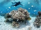 Šnorchlovanie na Maledivách