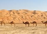 púšť Wahiba sands - Omán