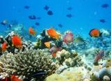 Naladhu - podmořský svet