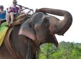 jazda na slonovi, Srí Lanka