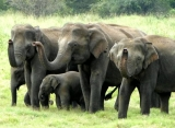 slonie safari, Srí Lanka