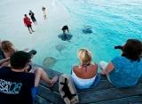 Reethi beach rezort - Krmenie rají