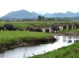 Národný park Minneriya, Srí Lanka