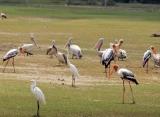 farební vtáci v Jaffne
