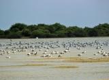 príroda v Jaffne