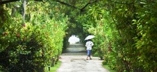 Ostrovná vegetacia