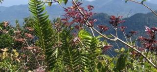 Dažďový  prales Sinharádža