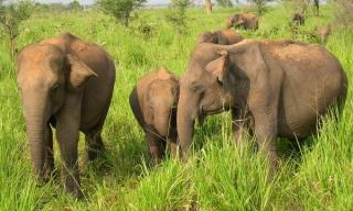 Zájazdy Srí Lanka - slony