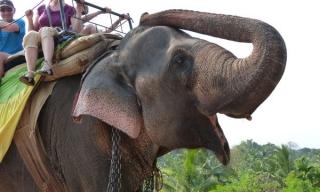 Luxusný zájazd Srí Lanka v zime