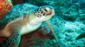 Podmorský svet Maledivy