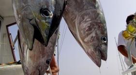 Rybolov na Maledivách