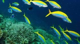 Šnorchlovacie plavby Maledivy
