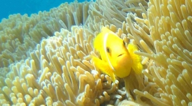 Šnorchlování Maledivy