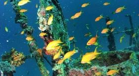 Potápačské plavby Maledivy