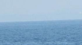 Modrá veľryba, Srí Lanka