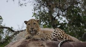 Safari Yala Srí Lanka