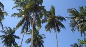 Srí Lanka dovolenka - očkovanie Srí Lanka