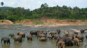 Sloní útulok Pinnewala