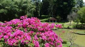 Botanická zahrada Kandy