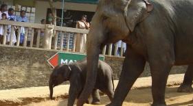 Pinnewala, Srí Lanka