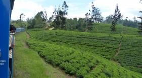 Cesta vlakem přes čajové plantáže